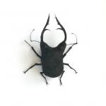 Adrienne Antonson: escarabajo hércules de pelo humano