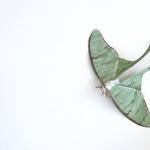 Adrienne Antonson: escultura de mariposa de la luna hecha de pelo humano
