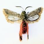 Adrienne Antonson: mariposa de fantasía hecha de pelo humano