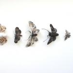 Adrienne Antonson: mariposas y polillas de pelo humano