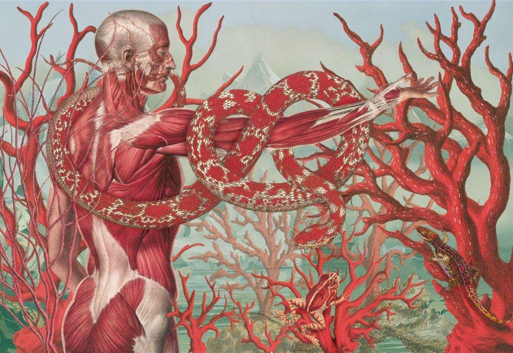 Referencias de anatomía humana para tu arte - Totenart