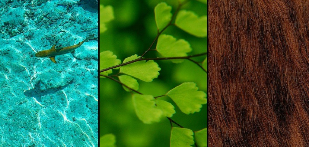 totenart-bellas-artes-turquesa-verde-marron-colores-tiburon-hoja-pelo-oso