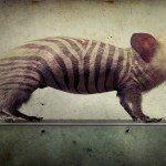 'Animales combinados', del fotógrafo sueco Fredrik Ödman