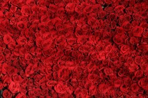 totenart-color-rojo-pasión