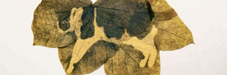 Cómo imprimir tus fotografías en hojas de árboles