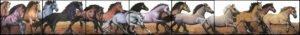 totenart-caballo-miguel