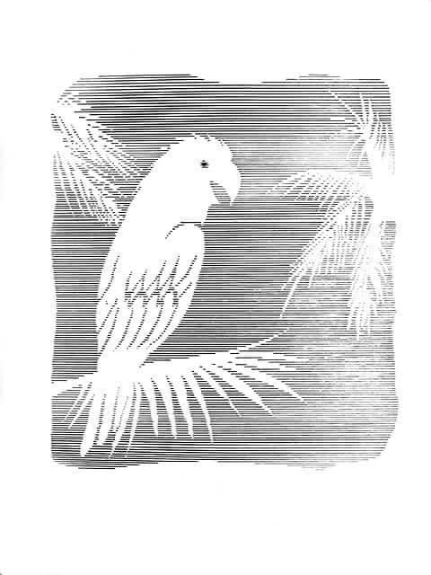 eclosion-dibujo-a-plumilla-totenart