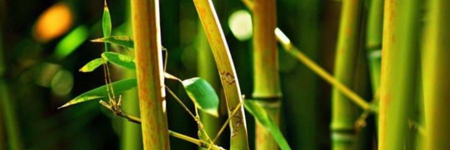 Cómo utilizar la plumilla de bambú – con vídeos